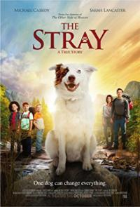 Poster The Stray