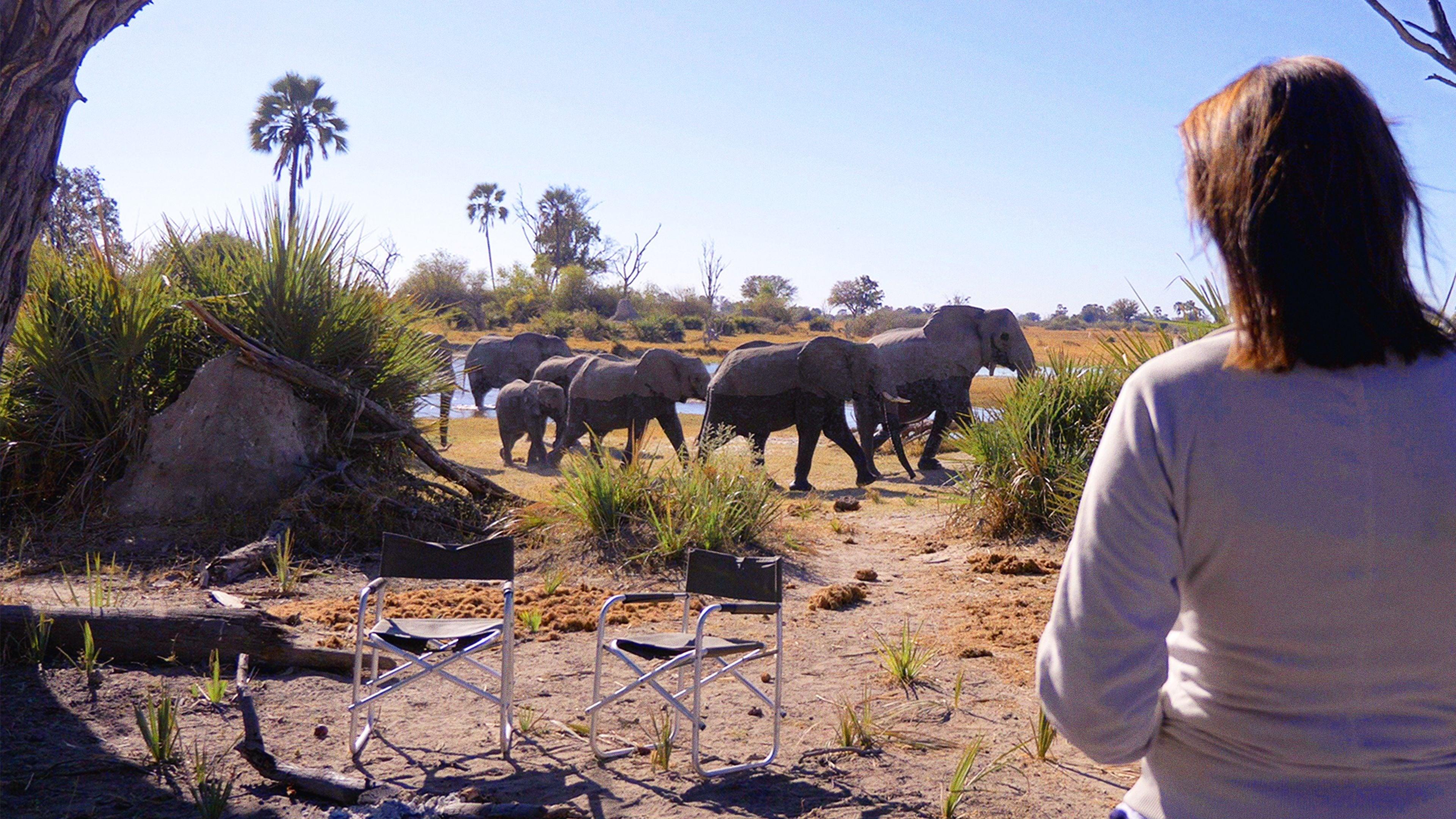 Película Tras los Pasos del Elefante en GNULA