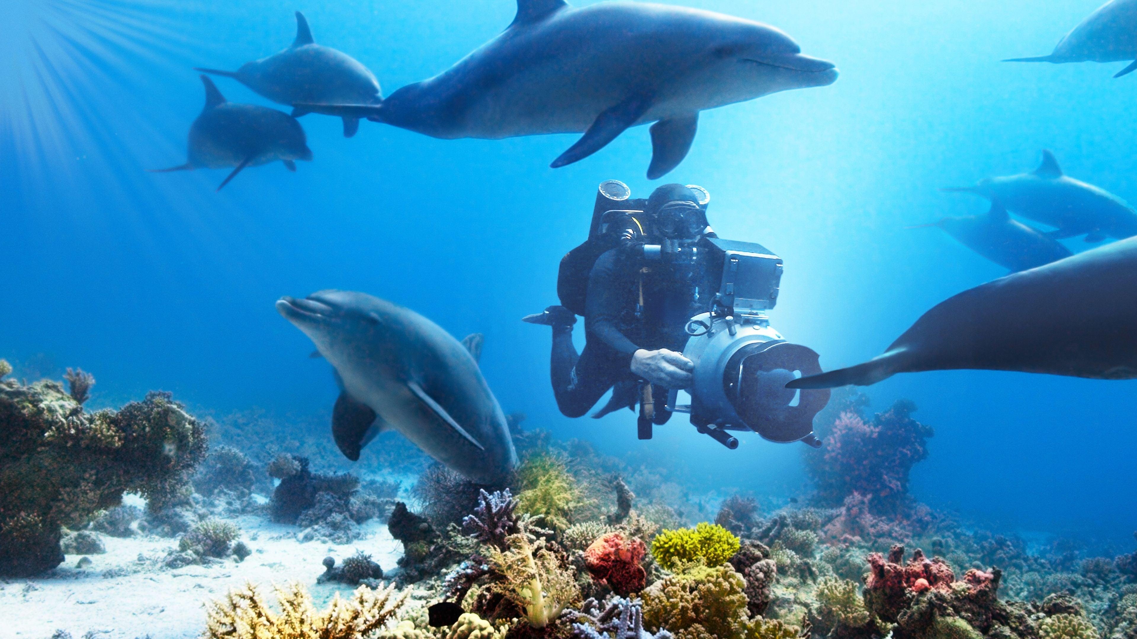 Película Nadando con Delfines en GNULA