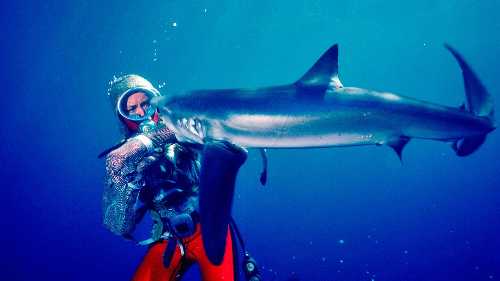 Película Jugando con tiburones en GNULA